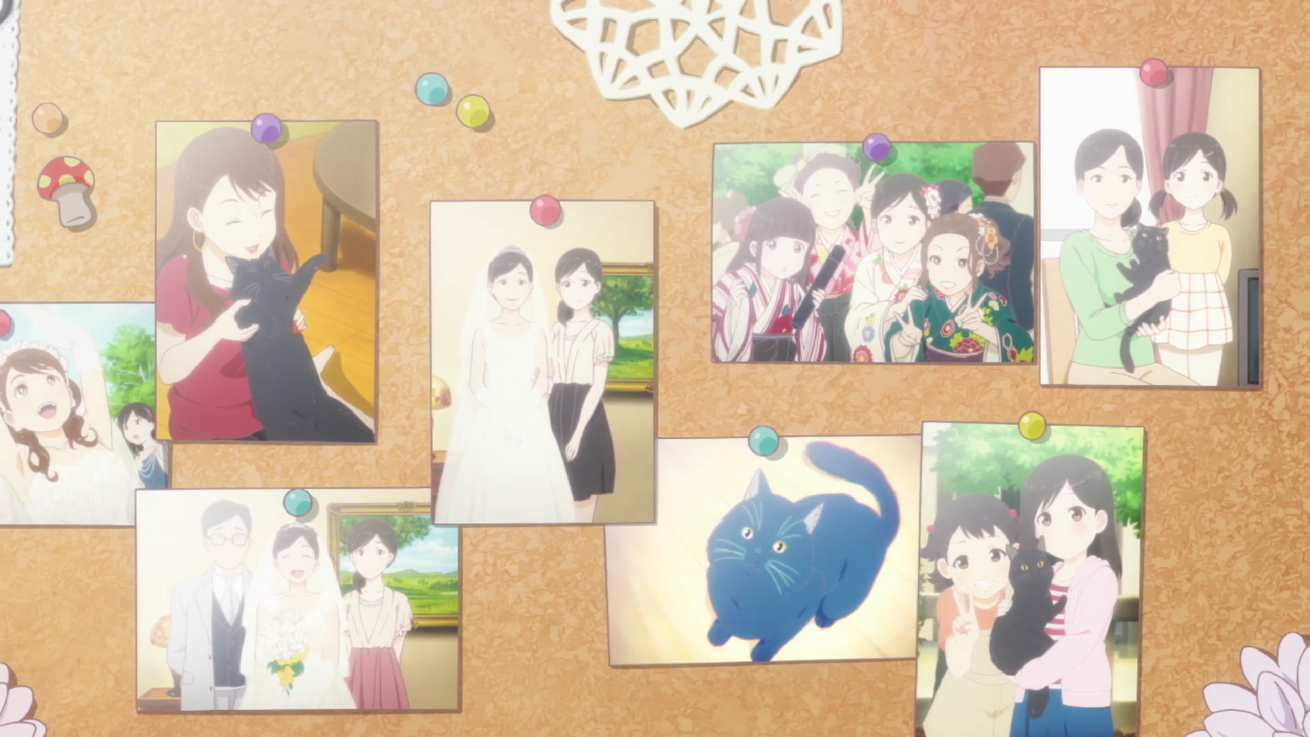A cork notice board with photos pinned to it of weddings, happy groups of friends and family, and Daru the cat